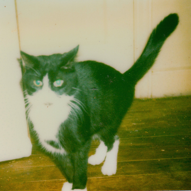 Bandit the tuxedo cat. Taken 26 November 1978. Age 4.